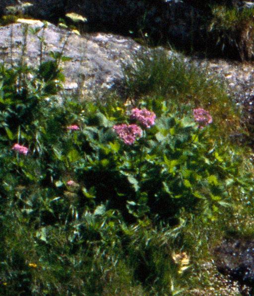 WW_0003-crop-520w